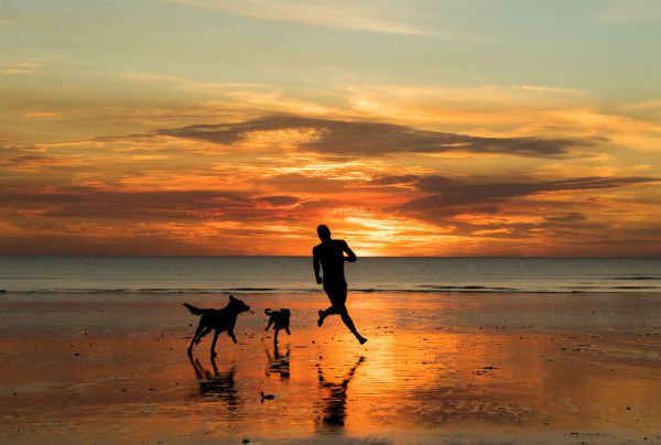 pet friendly shoalhaven